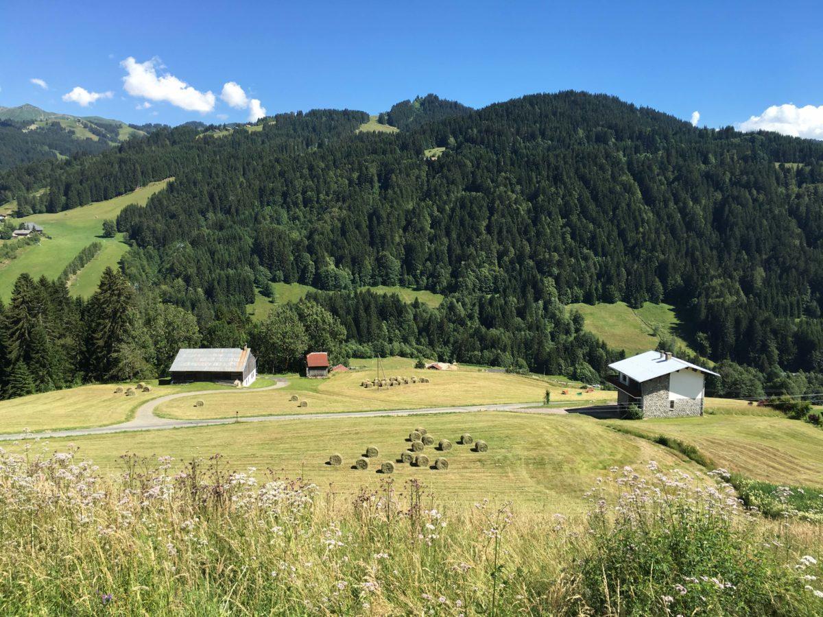 Alpine meadows: Haute Savoie